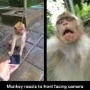 Monkey's first selfie