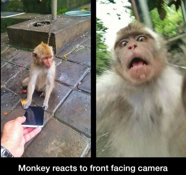 Monkey's first selfie