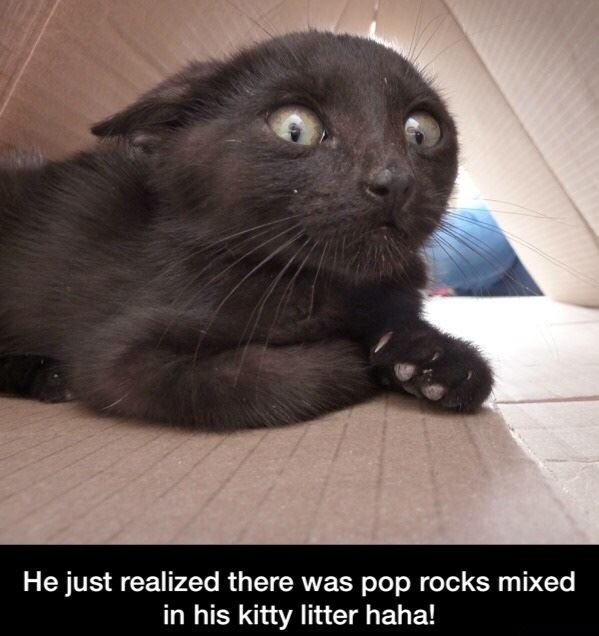 Pop Rocks in his kitty litter