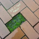 Tiny forrest amongst bricks