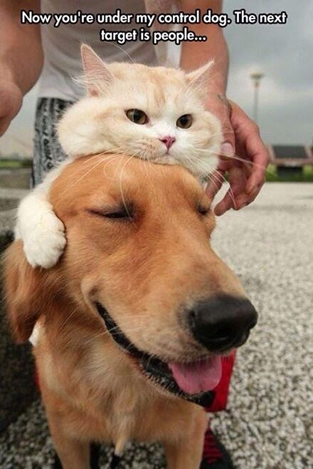 Mind controlling cat