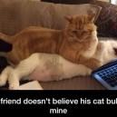 My friend doesn't believe his cat bullies mine