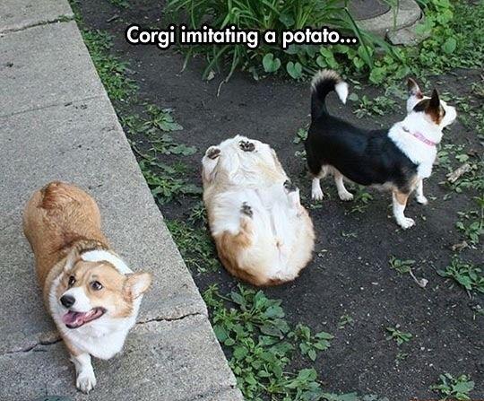 Potato imitation