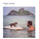 Puppy surfing