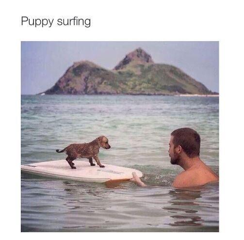 Puppy surfing
