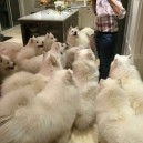 When you open a pack of gum