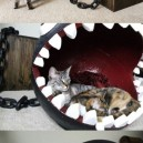 Chomp bed