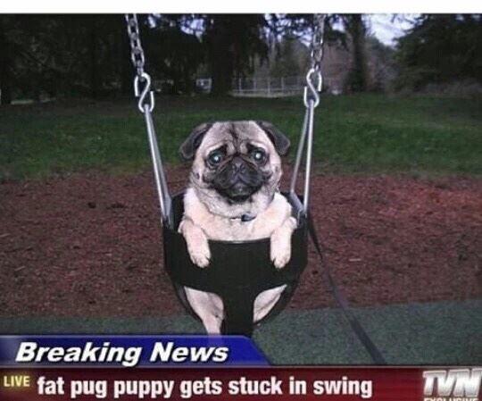 Poor pug