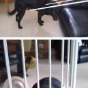 This Dog Has Shamed His Ancestors