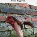 Chicken With Ponytail