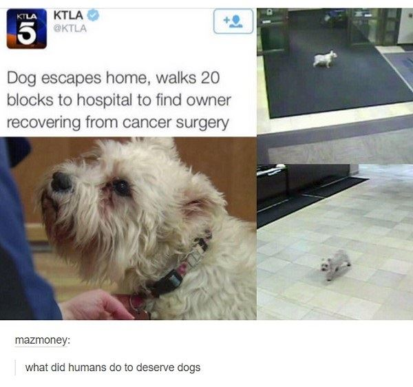 Dogs are truly humans best friends