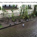 Today I interrupted a secret Pigeon Army briefing…