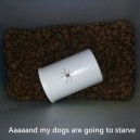 The dog are going to starve