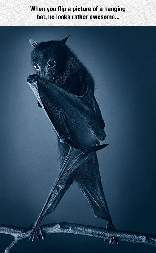 When you flip a picture of a bat