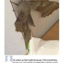 A Dinosaur of a Moth