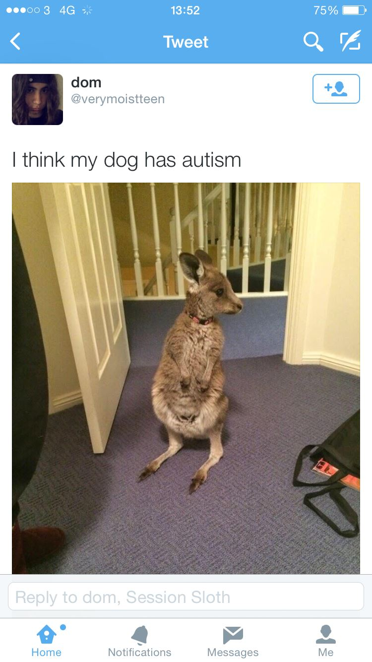 Dog with autism