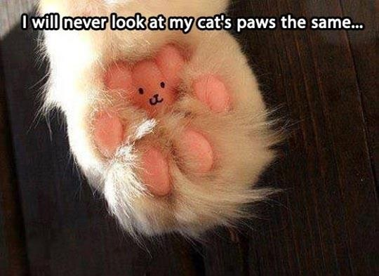 I a different view of the cats paw