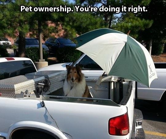 This Is How You Take Care Of Your Pet