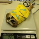 Correct Way To Weight An Owl