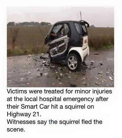Smart Car vs. Squirrel