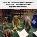 Winnie The Pooh Inspiration