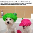15 good tips for dog owners