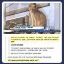 A cat as mayor