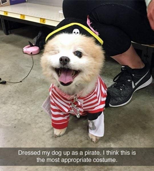 Appropriate Costume For A One Eyed Dog