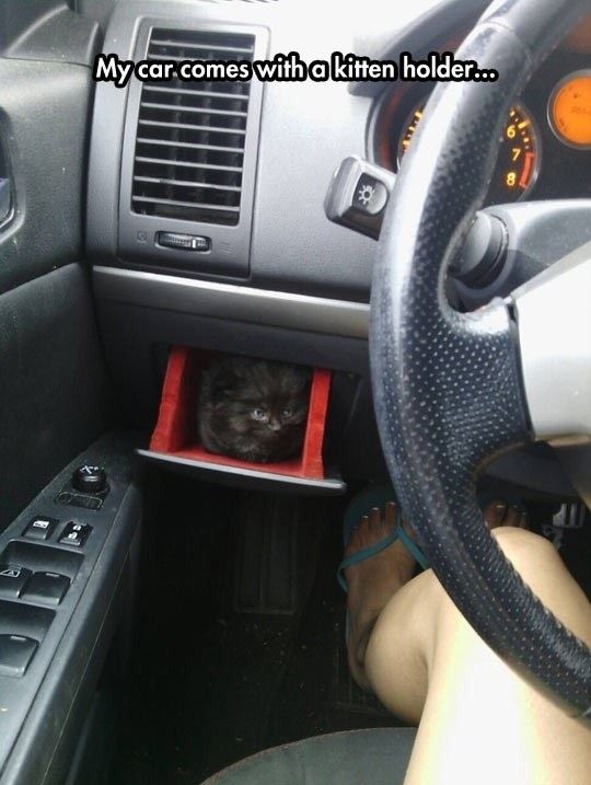 Car with a kitten holder