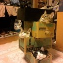 Crazy cat lady Jenga