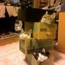 Crazy cat lady Jenga