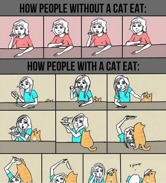 How Cat Owners Usually Eat