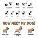 Now Meet My Dog