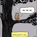 The Narcissistic Owl
