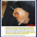 The Unicorn Hamster