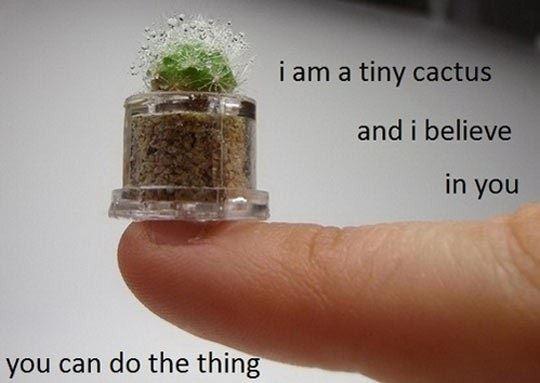 Tiny Inspirational Cactus