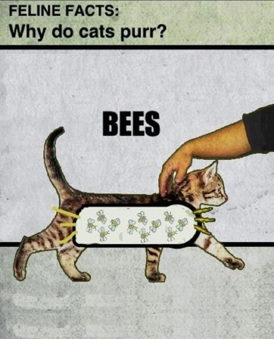 Why do cats pur