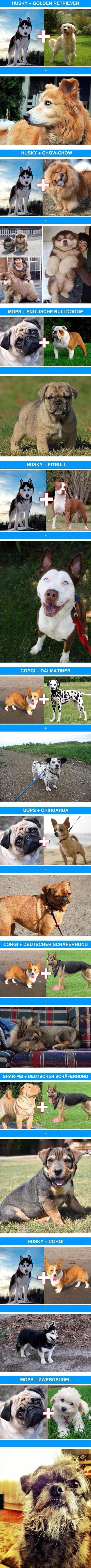 Cool dog cross breed combinations