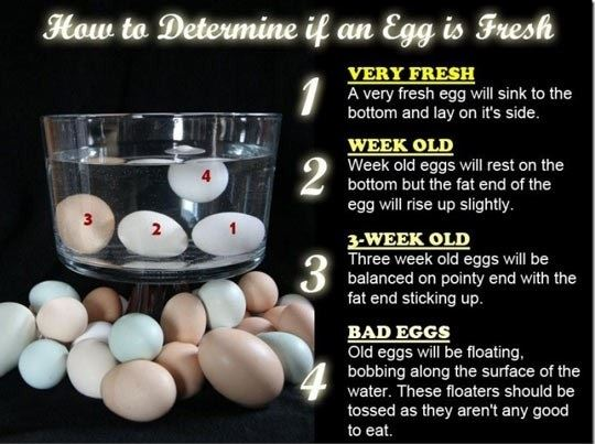 How to see if an egg is fresh