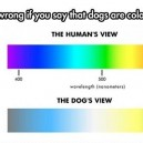 Dogs ar not color blind