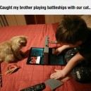 Playing Battleships with your cat