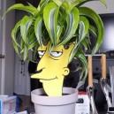 Sideshow Bob Plant