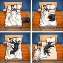 Sleeping with dogs in the bed