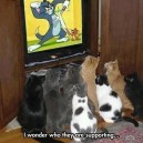 Tom And Jerry Fans