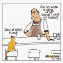 Kitty Walks Into A Bar