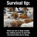Important Survival Tip