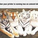 Printer Running Low On Ink
