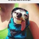 Sid the dog