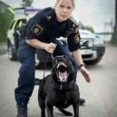 Swedish Police Doesn't Mess Around