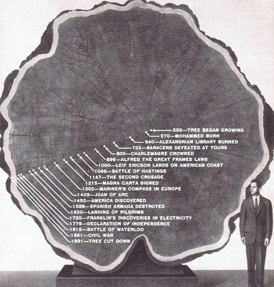 The Long Life Of A Tree